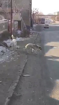 Nune stops to feed dogs