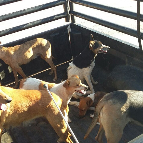 Katutura Feeding & Vet Care Project Update from Namibia