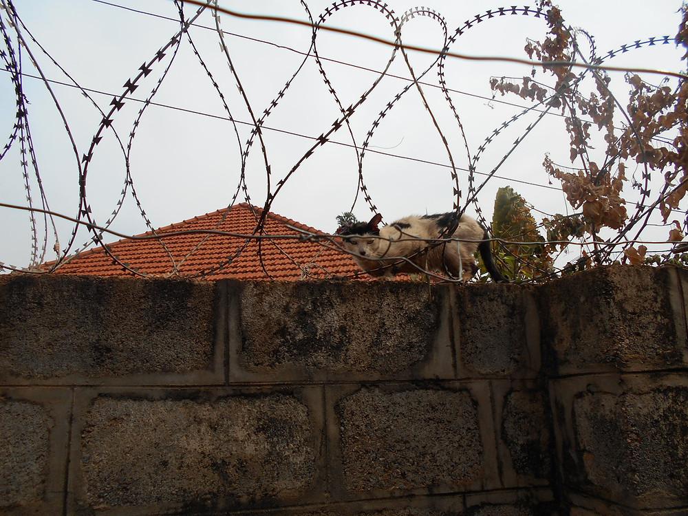 Tutu injured by razor wire