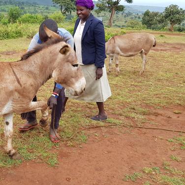 Bam donkey vet clinic
