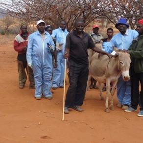 Donkey vet clinic, August 2015
