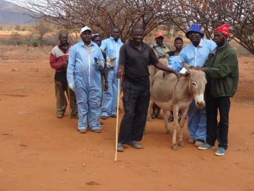 Donkey vet clinic August 2015-the team