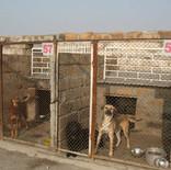 SAA shelter w/o roofs.jpg
