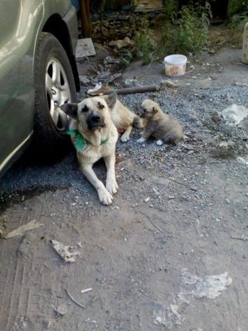 Street dog with puppy