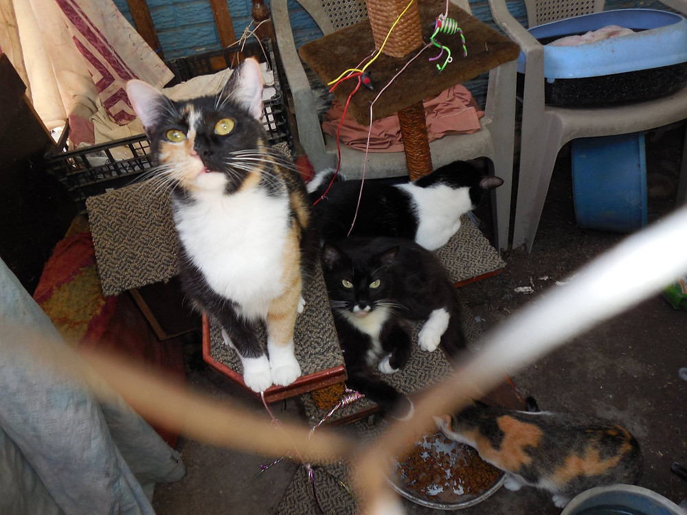 Some of the kitties at the HHHH sanctuary