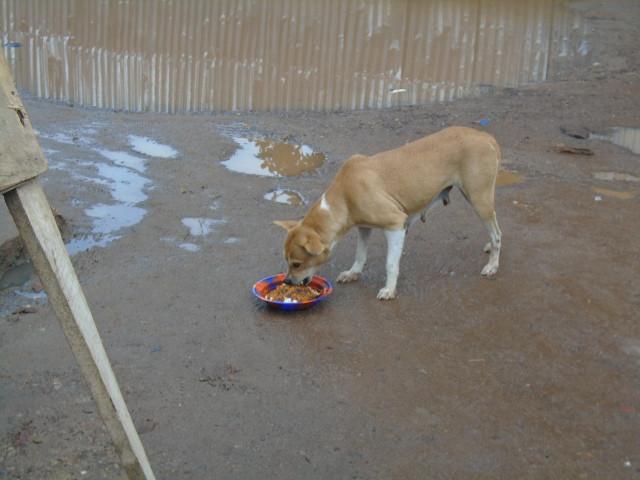 A beneficiary of the street dog feeding program
