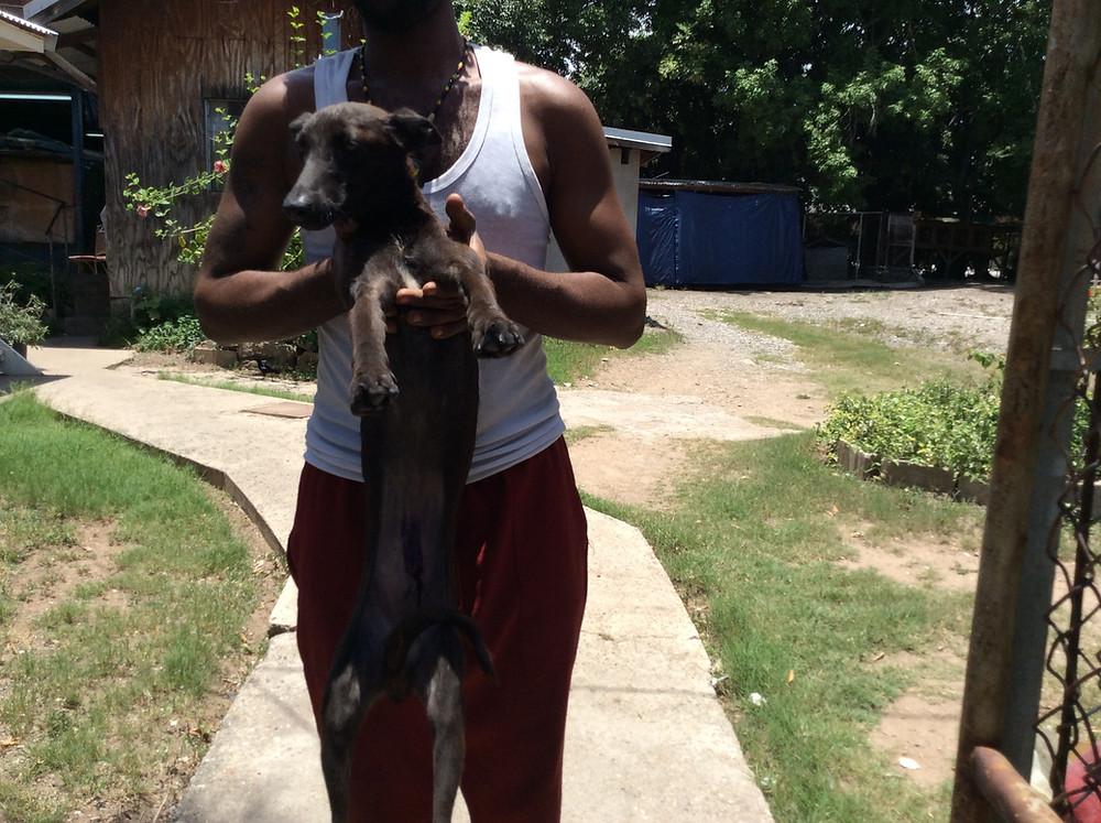 Dog captured for spaying