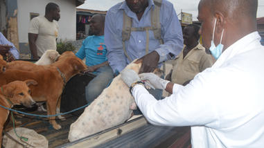 Sept 12 rabies clinic drive up in pick u