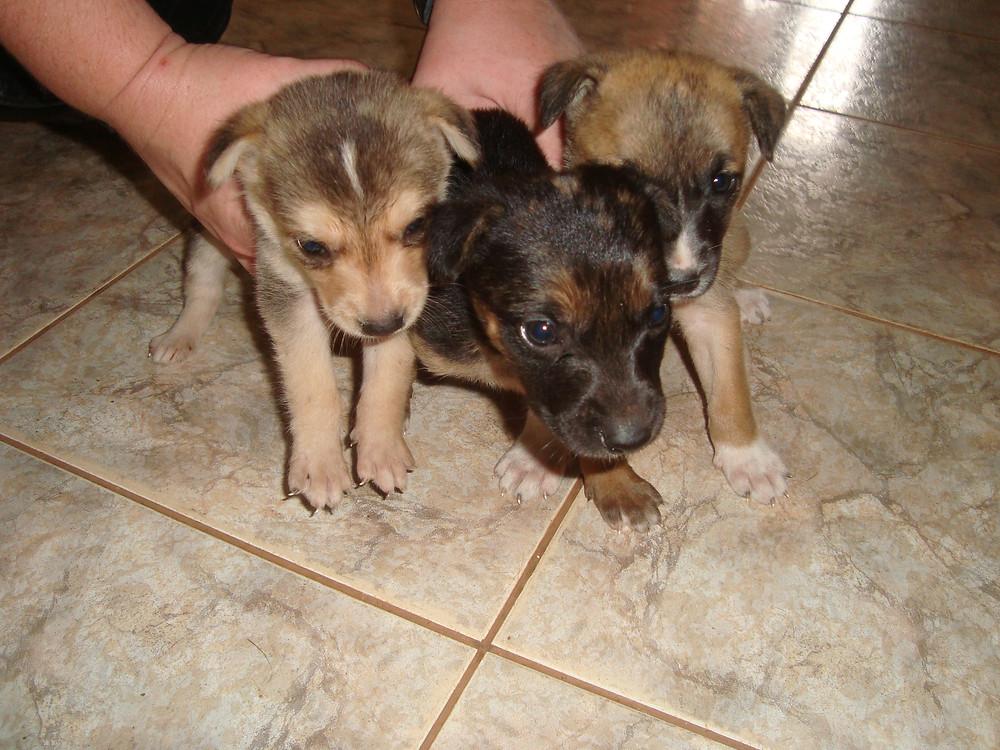 Sarah rescued 3 puppies