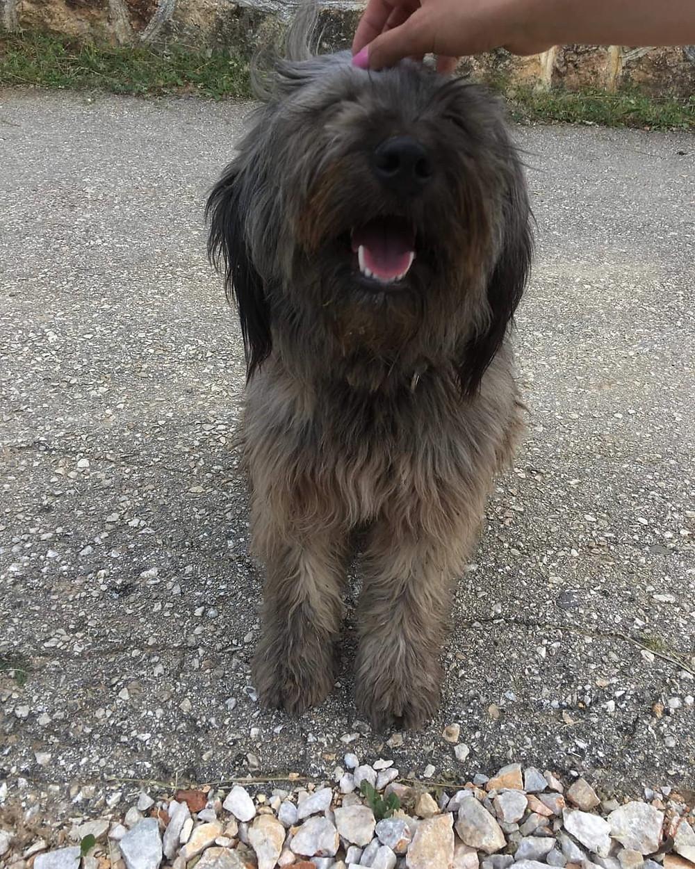 Bubu-Ilina's dog