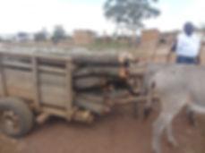 10th anniv Chato district NW TZ donkeys