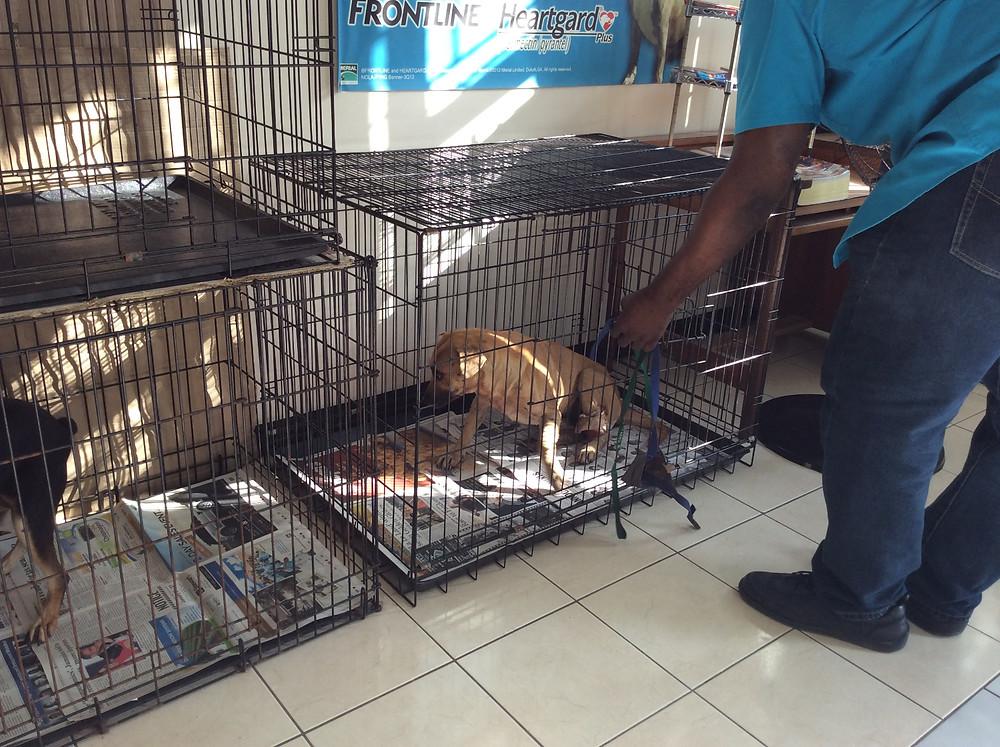 Mauled dog at the vet