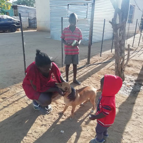 AKI donations supporting emergency care, spay/neuter, & more in Namibia (June-September 2019)