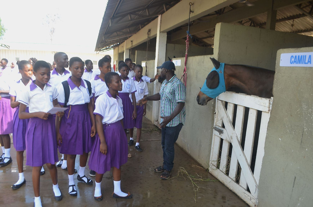 horse welfare at the polo club
