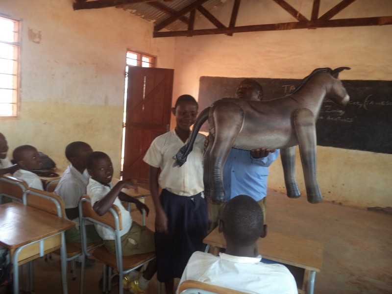 TAWESO's Humane Education Programme aims to increase compassion for all animals