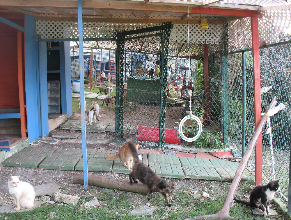 The Hope Sanctuary cattery