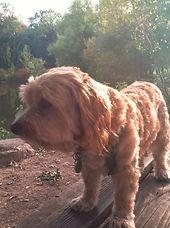 Sheldon, Barbara's dog
