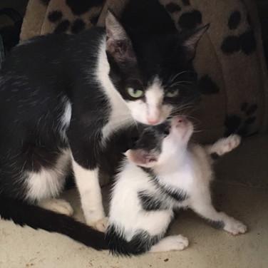 Free-roaming mama and her kitties