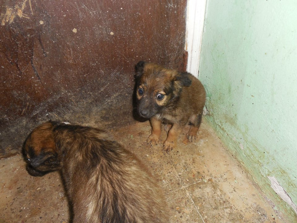 Two very scared puppies are rescued by HHHH, vaccinated and provided vet care-thanks to AKI donors
