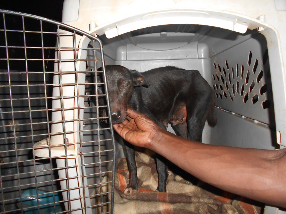 Dog rescued from Lweza