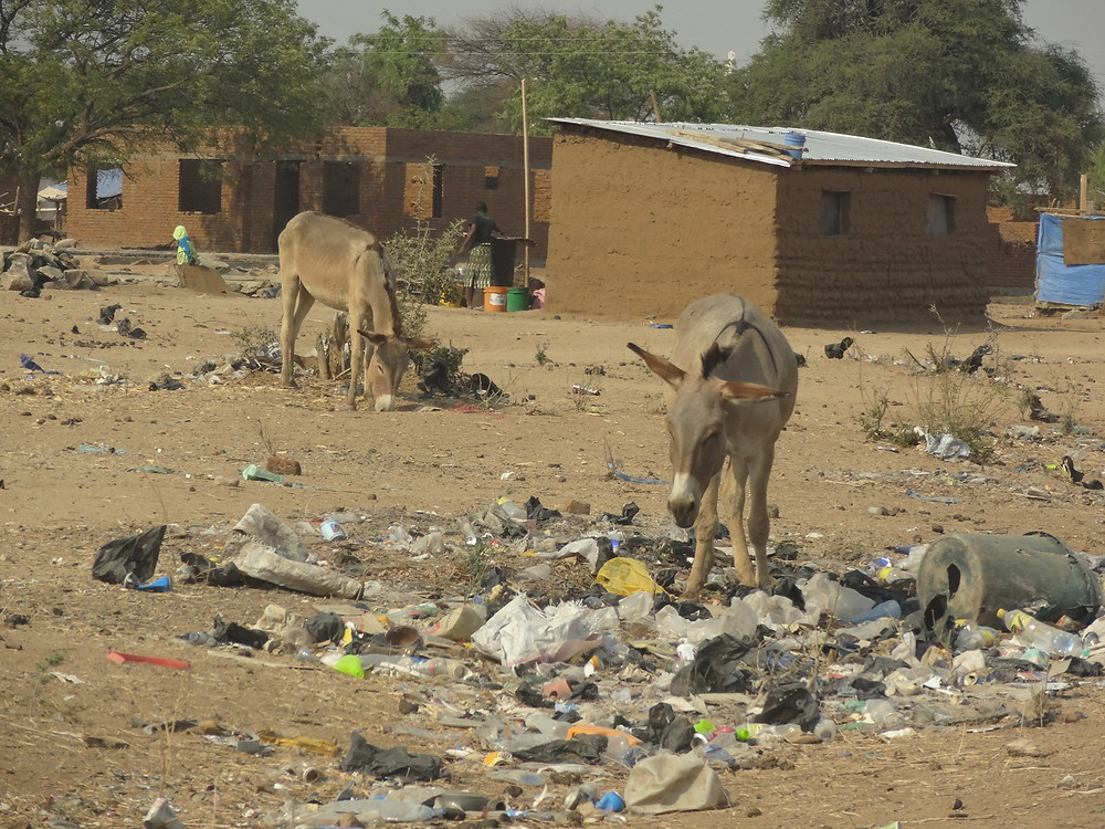 It's been very dry in Iringa and the only food for donkeys is in the rubbish dumps