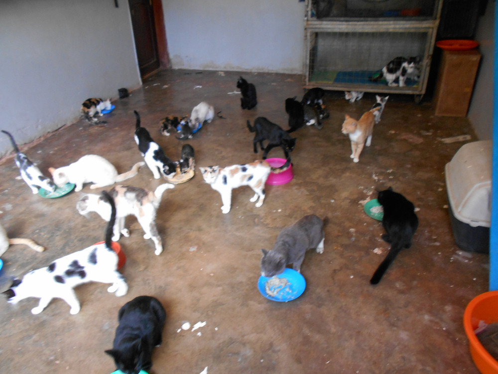 So many rescued and brought back to life-so many more in need