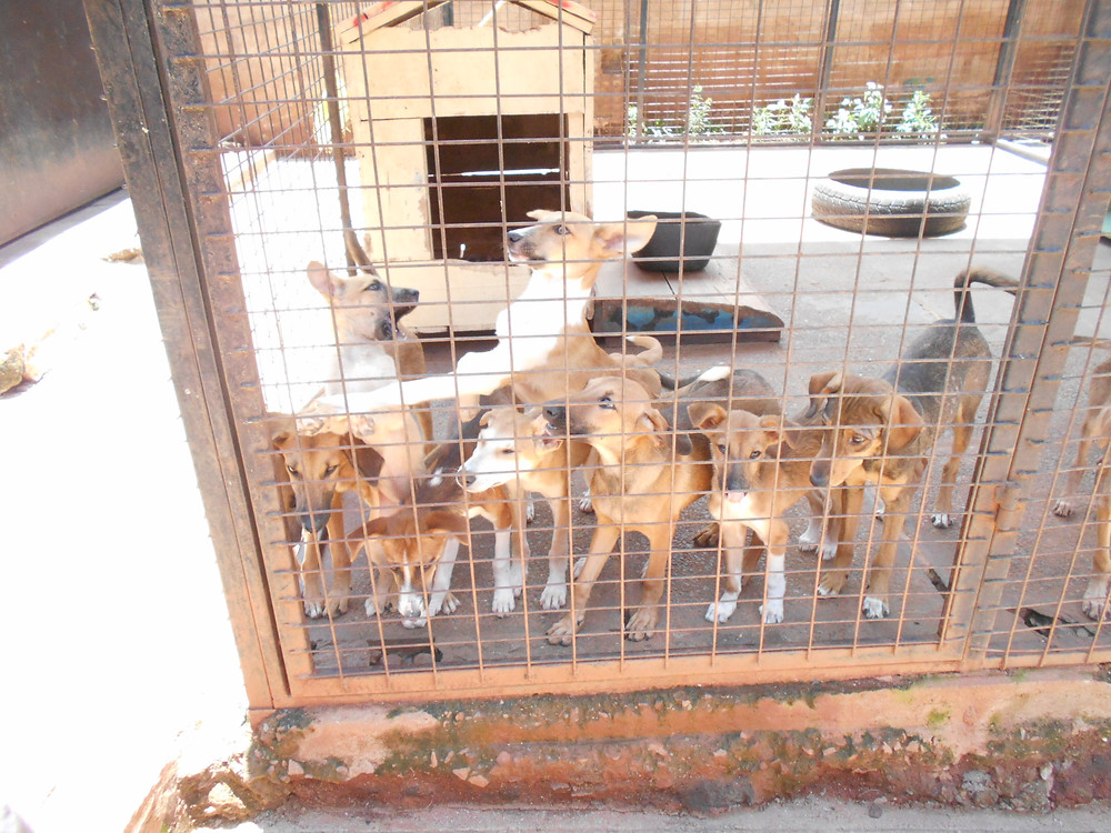 Some of The Haven dogs on March 23