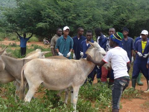 Donkey treatment