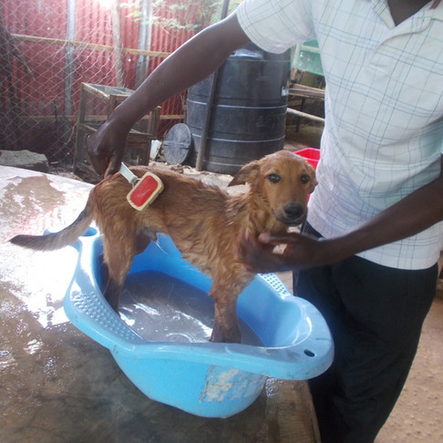AKI donors help TAWESO rescue Dar es Salaam dogs