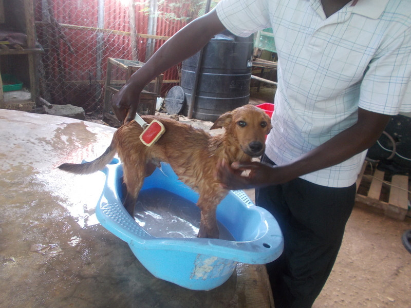 Puppy Sosi was rescued & is looking for a permanent home