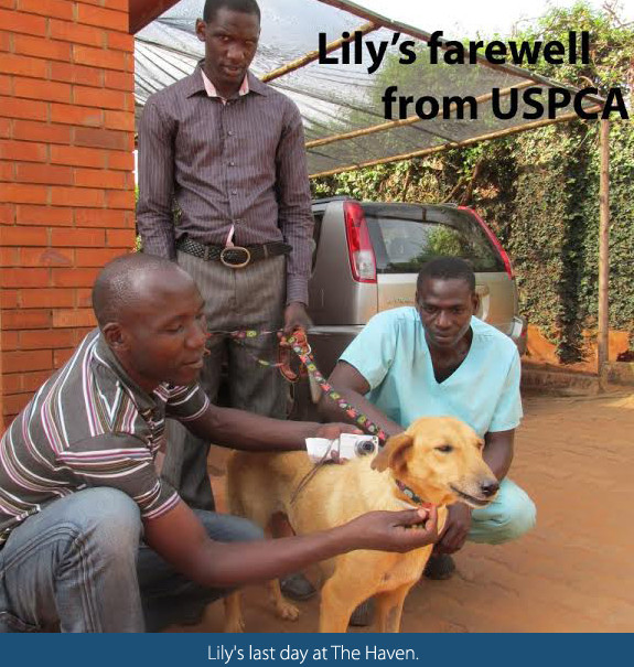 Lily's farewell party