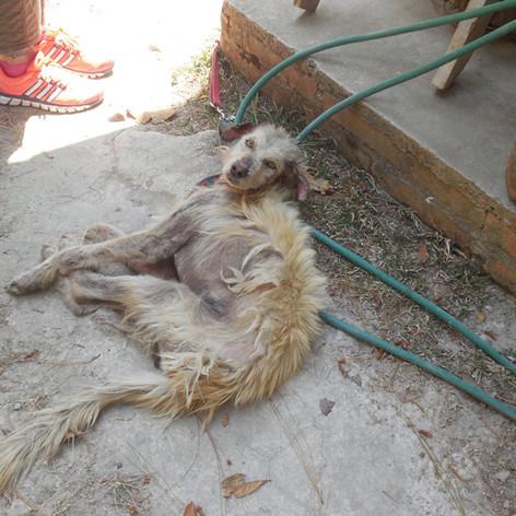 Zorrito - when rescued (before pic)