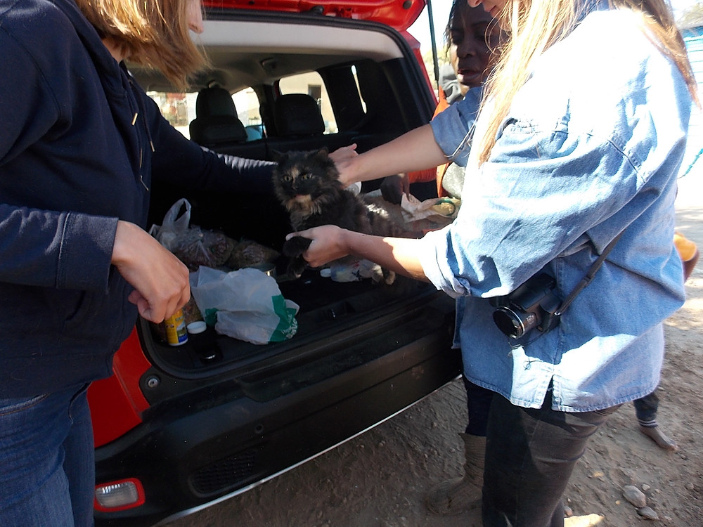 3 June Katutura visit-kitty getting a check up