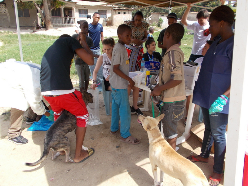 TAWESO Vet Clinic