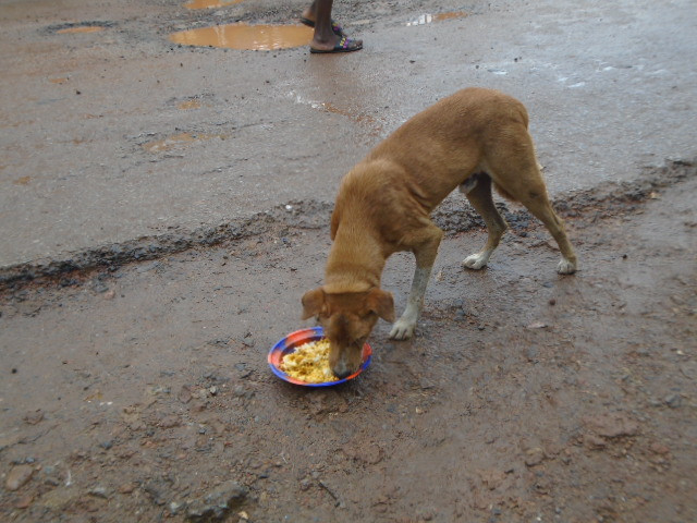 Another beneficiary of the street dog feeding program