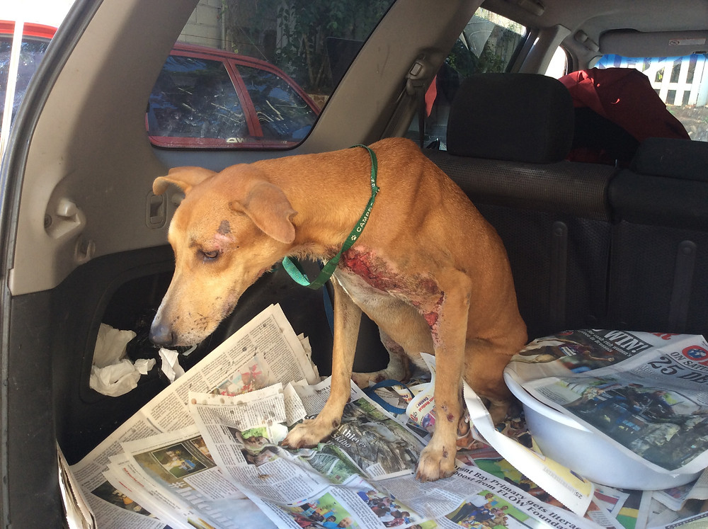 Dog was hit by a speeding car!
