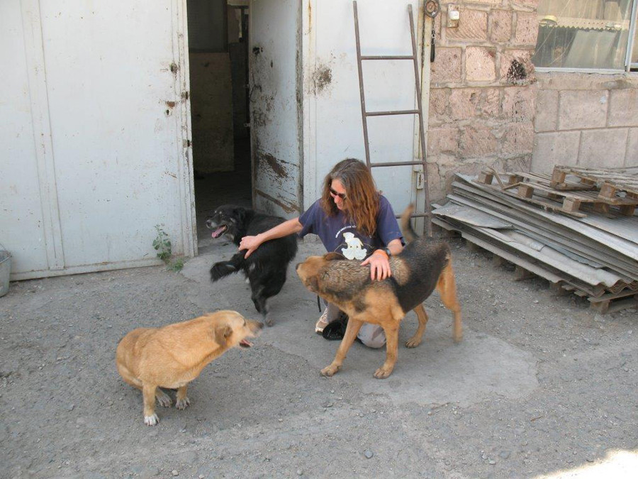 My visit to the SAA shelter in 2013