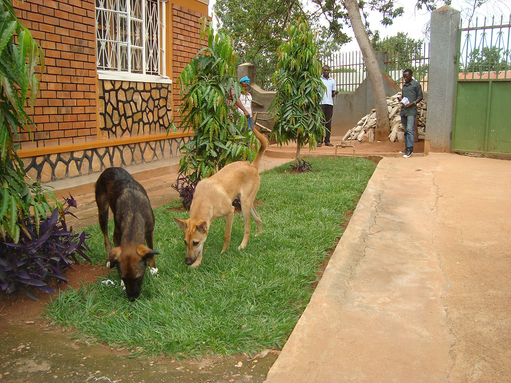Ruth's new USPCA dogs