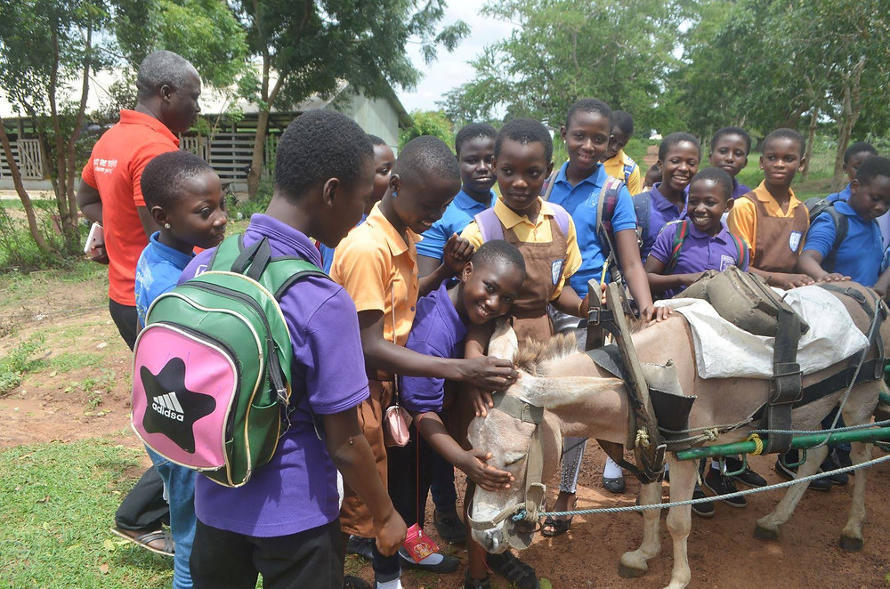 donkey and students