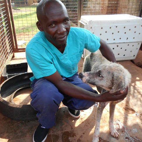 Will 2018 be the year for a new Haven + info on how the Uganda SPCA used your donations