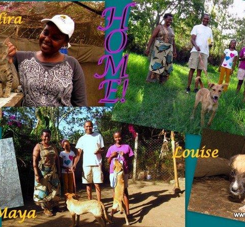 Mbwa wa Africa-Dogs of Africa Joins the AKI Family