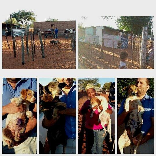 Five dogs in Aranos spayed with AKI funds