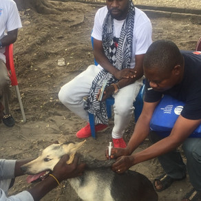 Save Animals in the Democratic Republic of Congo Holds a Rabies Vaccination Clinic (and more!)