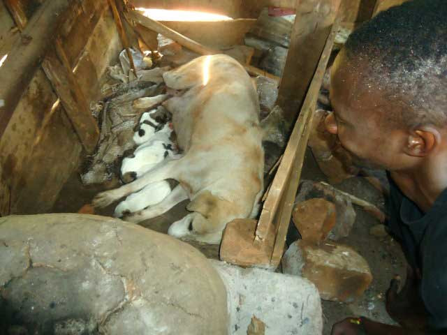Topy was removed from her home where she produced puppies every 6 months