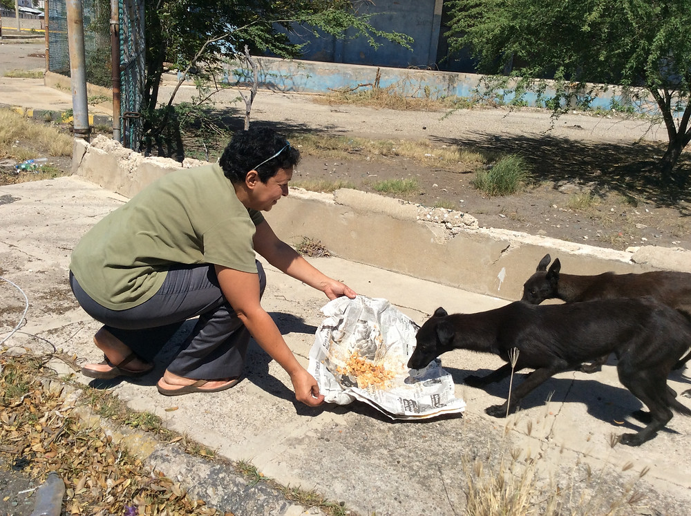Deborah feeding 2 young street dogs