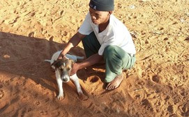 Aranos farm worker with 1 of the dogs that were spayed