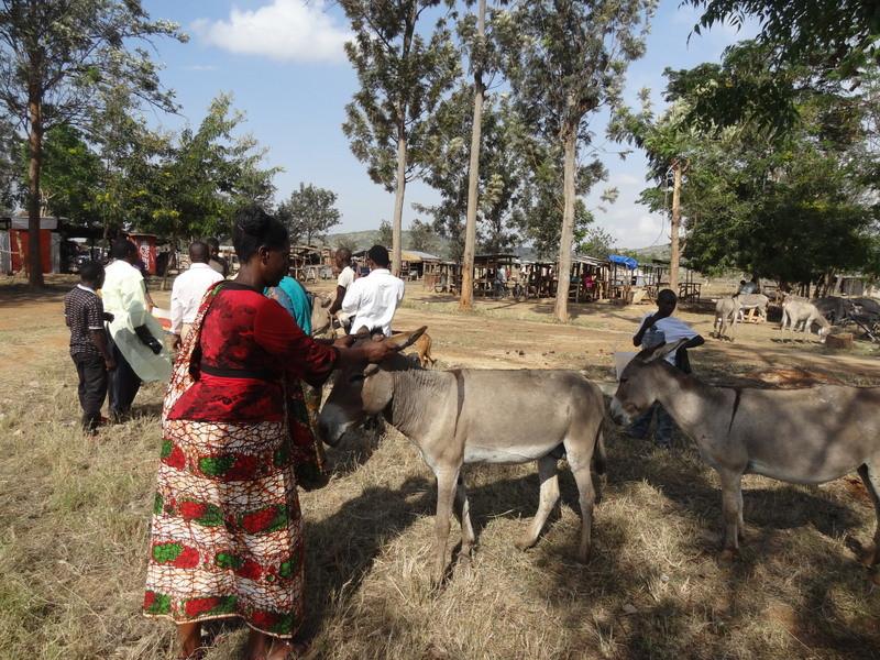 Donkey Welfare Clinic