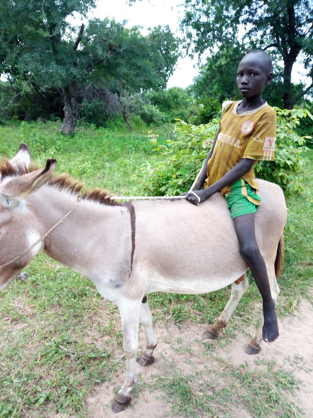 Child on donkey, used for transport