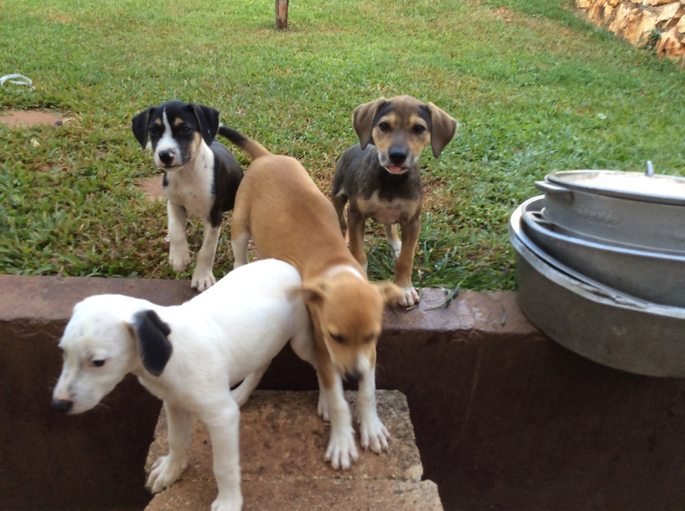 4 puppies at KCAW's newly renovated kennels