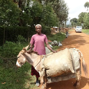 Uganda's Bam Animal Clinics-Helping Donkeys During Difficult Times